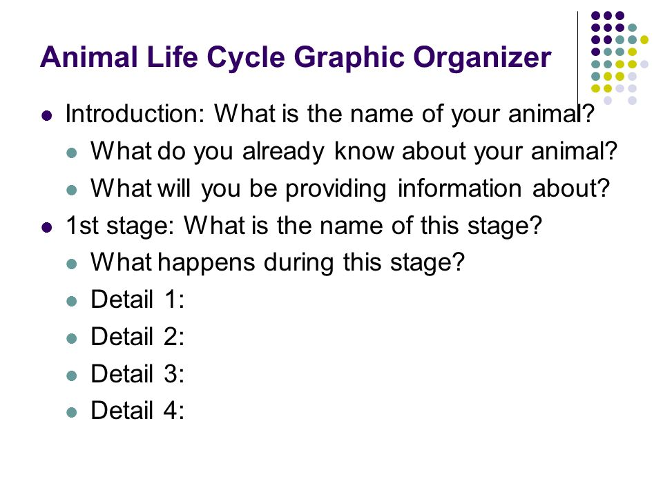 Animal Life Cycle Graphic Organizer Introduction: What is the name of your animal? What do you already know about your animal? What will you be provid