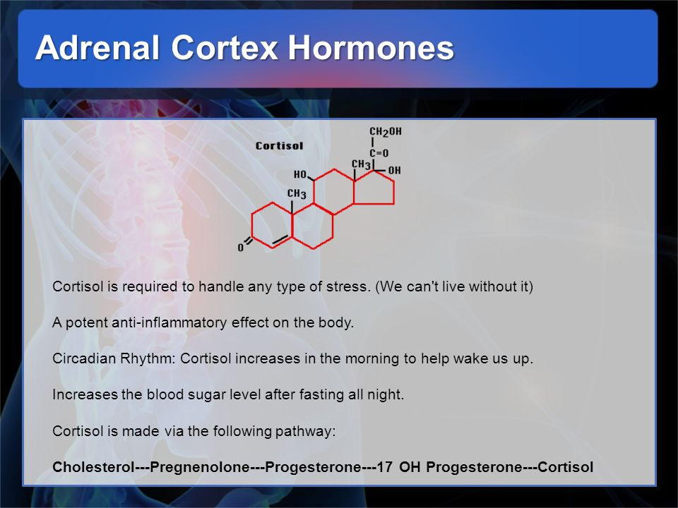 Adrenal Cortex Hormones Cortisol is required to handle any type of stress. (We can't live without it) A potent anti-inflammatory effect on the body. C