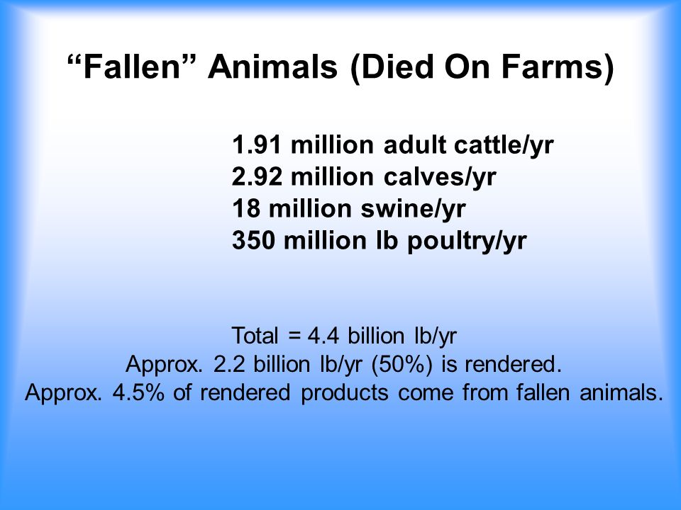 Fallen Animals (Died On Farms) 1.91 million adult cattle/yr 2.92 million calves/yr 18 million swine/yr 350 million lb poultry/yr Total = 4.4 billion lb/yr Approx.