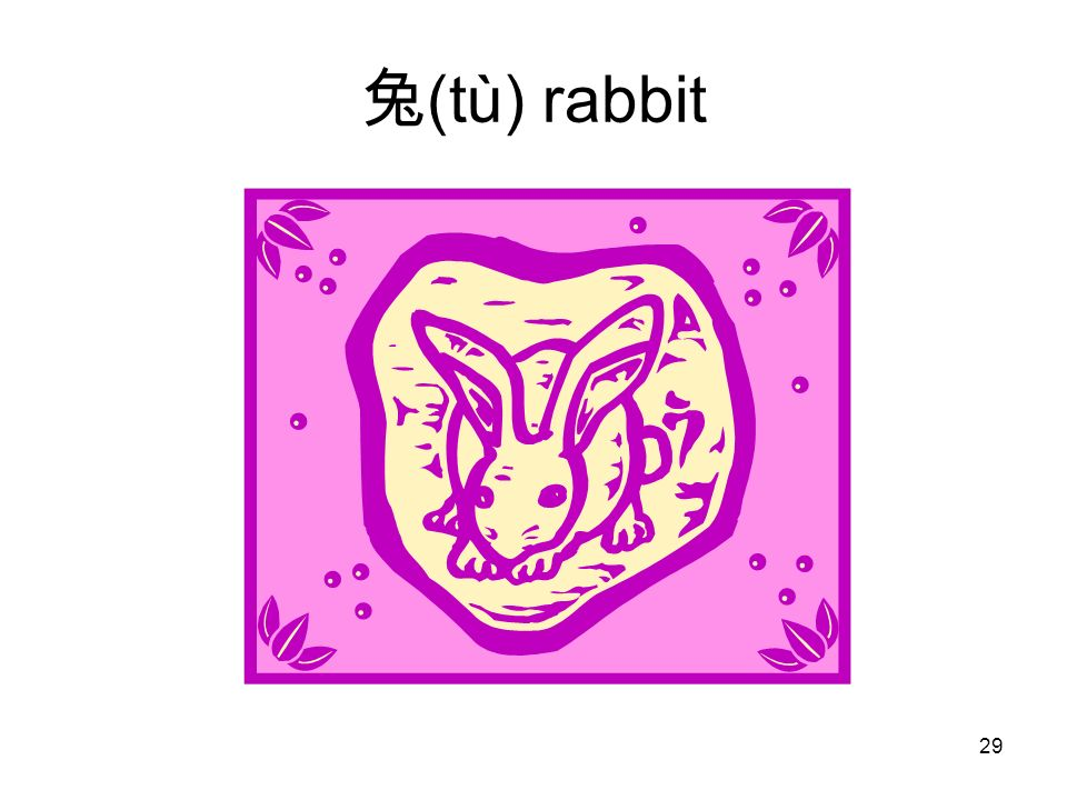 (tù) rabbit 29
