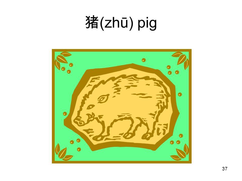 (zhū) pig 37
