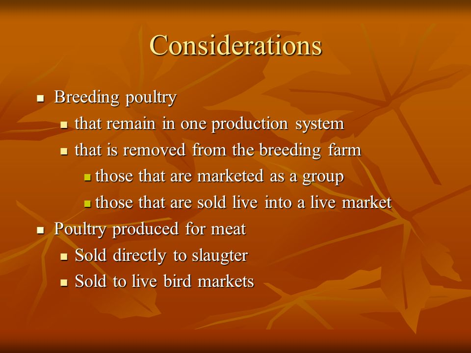 Considerations Breeding poultry Breeding poultry that remain in one production system that remain in one production system that is removed from the breeding farm that is removed from the breeding farm those that are marketed as a group those that are marketed as a group those that are sold live into a live market those that are sold live into a live market Poultry produced for meat Poultry produced for meat Sold directly to slaugter Sold directly to slaugter Sold to live bird markets Sold to live bird markets