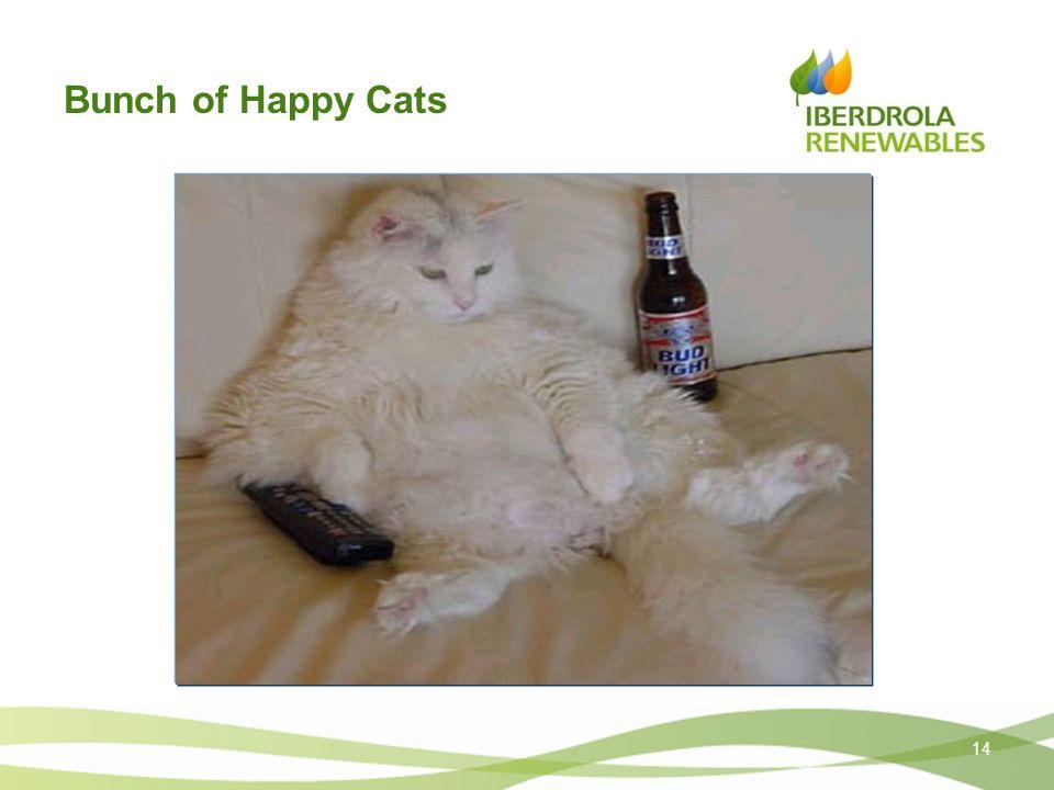 Bunch of Happy Cats 14