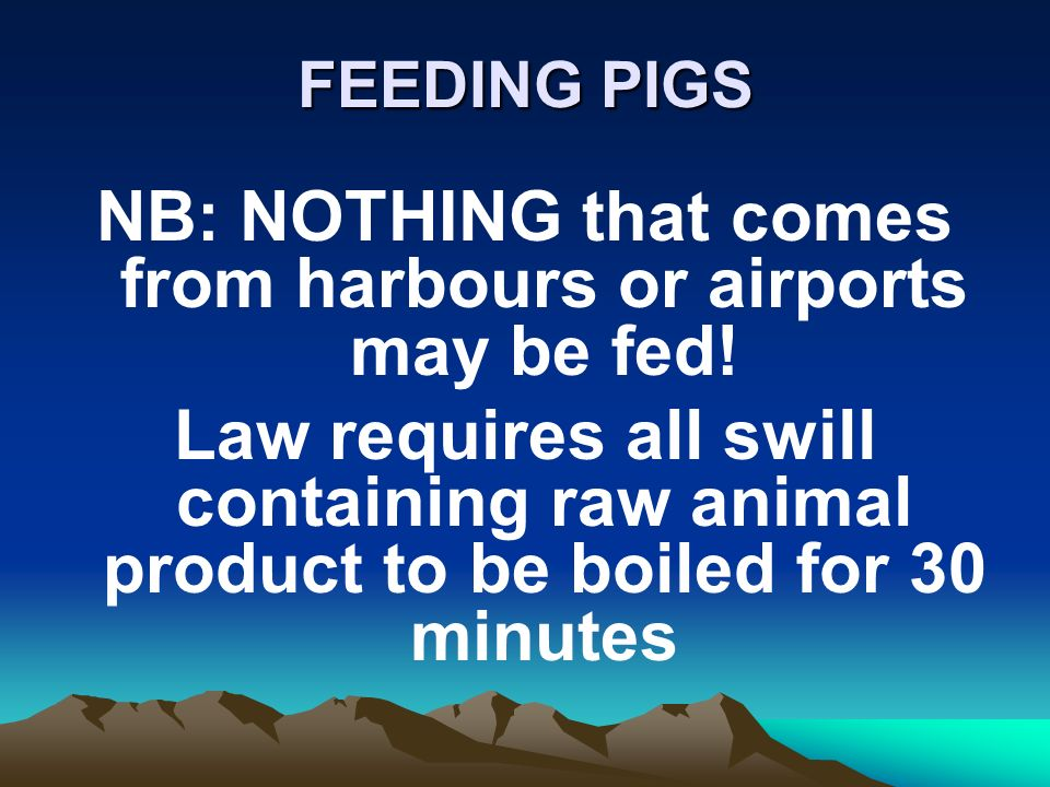 FEEDING PIGS NB: NOTHING that comes from harbours or airports may be fed.