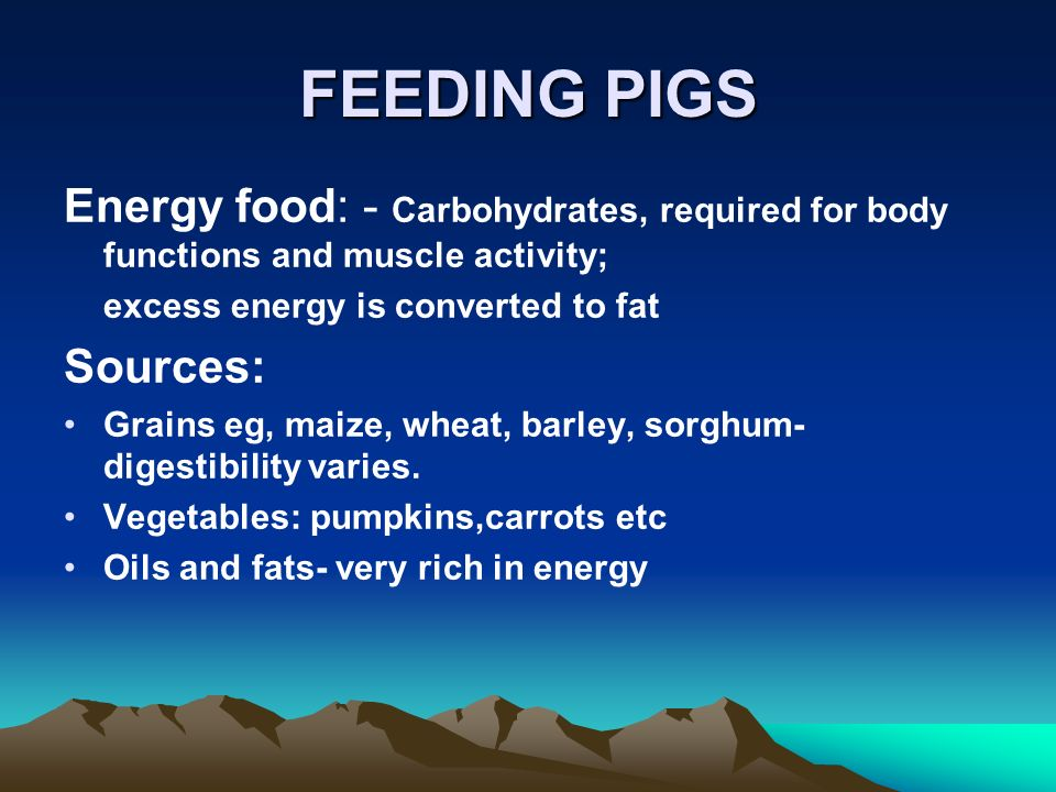FEEDING PIGS Energy food: - Carbohydrates, required for body functions and muscle activity; excess energy is converted to fat Sources: Grains eg, maize, wheat, barley, sorghum- digestibility varies.