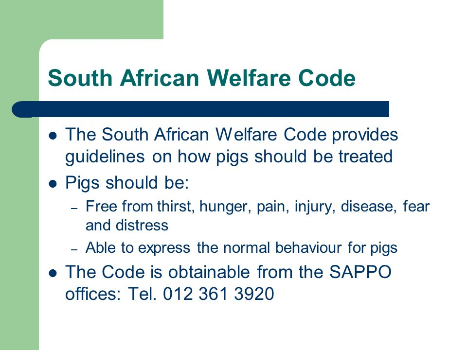 South African Welfare Code The South African Welfare Code provides guidelines on how pigs should be treated Pigs should be: – Free from thirst, hunger, pain, injury, disease, fear and distress – Able to express the normal behaviour for pigs The Code is obtainable from the SAPPO offices: Tel.