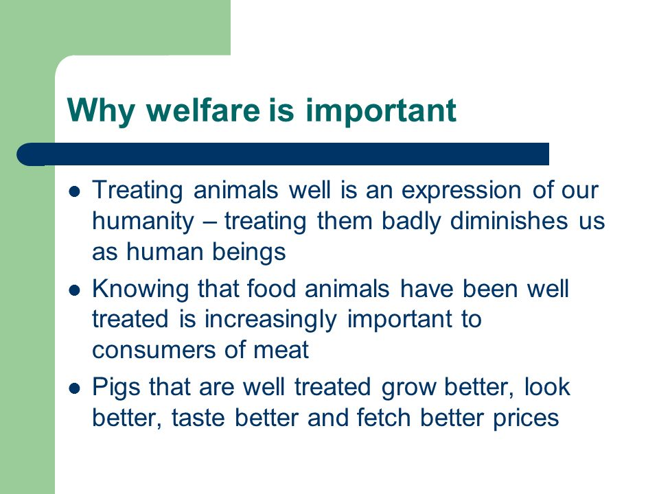 Why welfare is important Treating animals well is an expression of our humanity – treating them badly diminishes us as human beings Knowing that food animals have been well treated is increasingly important to consumers of meat Pigs that are well treated grow better, look better, taste better and fetch better prices