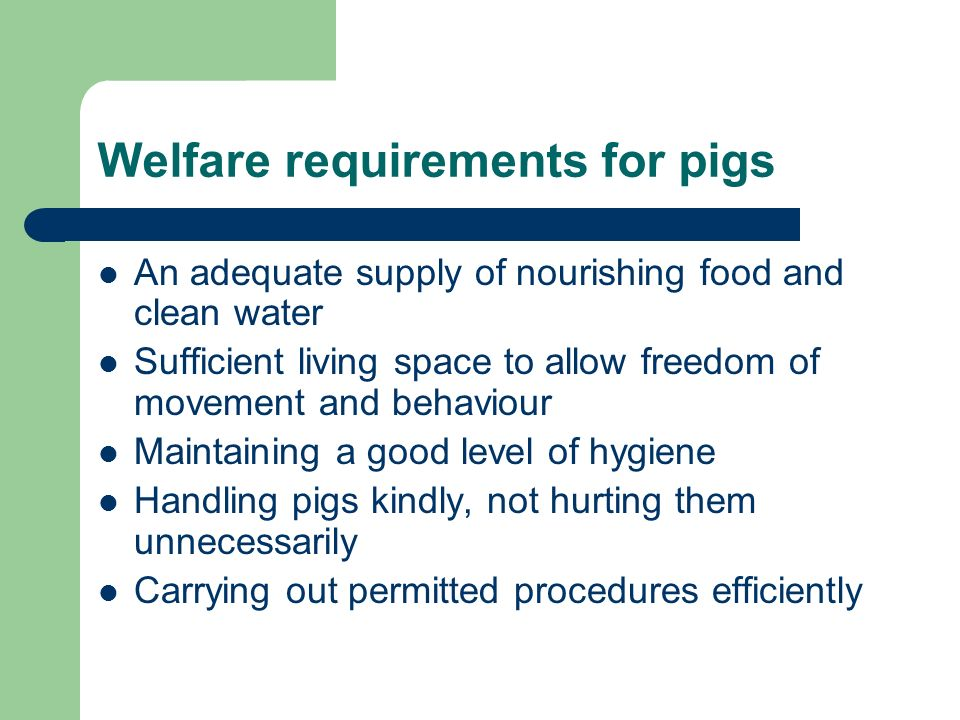 Welfare requirements for pigs An adequate supply of nourishing food and clean water Sufficient living space to allow freedom of movement and behaviour Maintaining a good level of hygiene Handling pigs kindly, not hurting them unnecessarily Carrying out permitted procedures efficiently