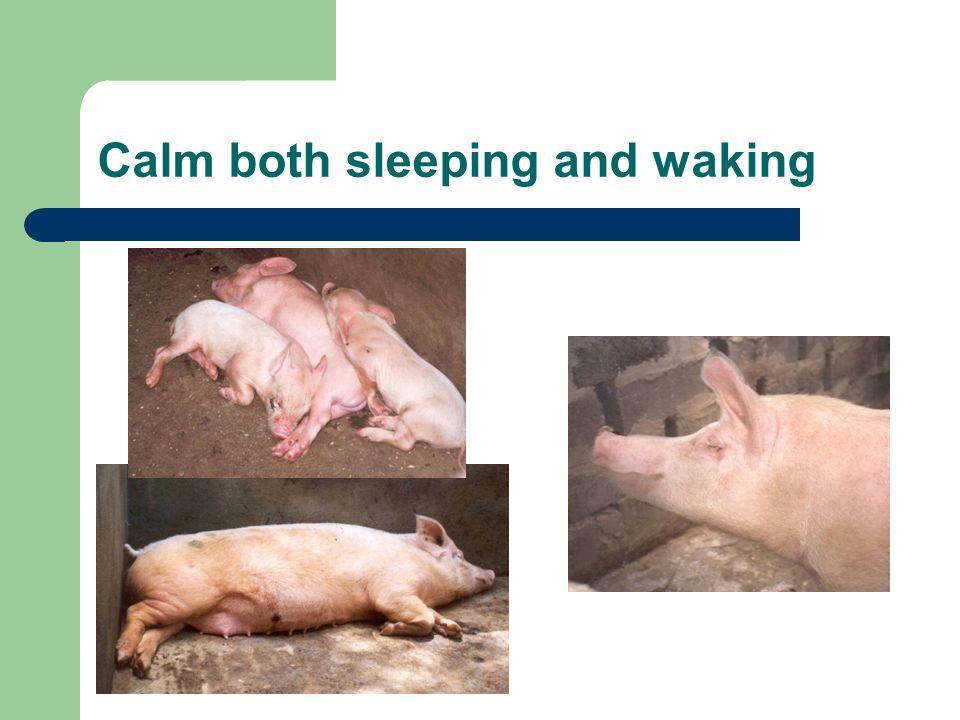 Calm both sleeping and waking