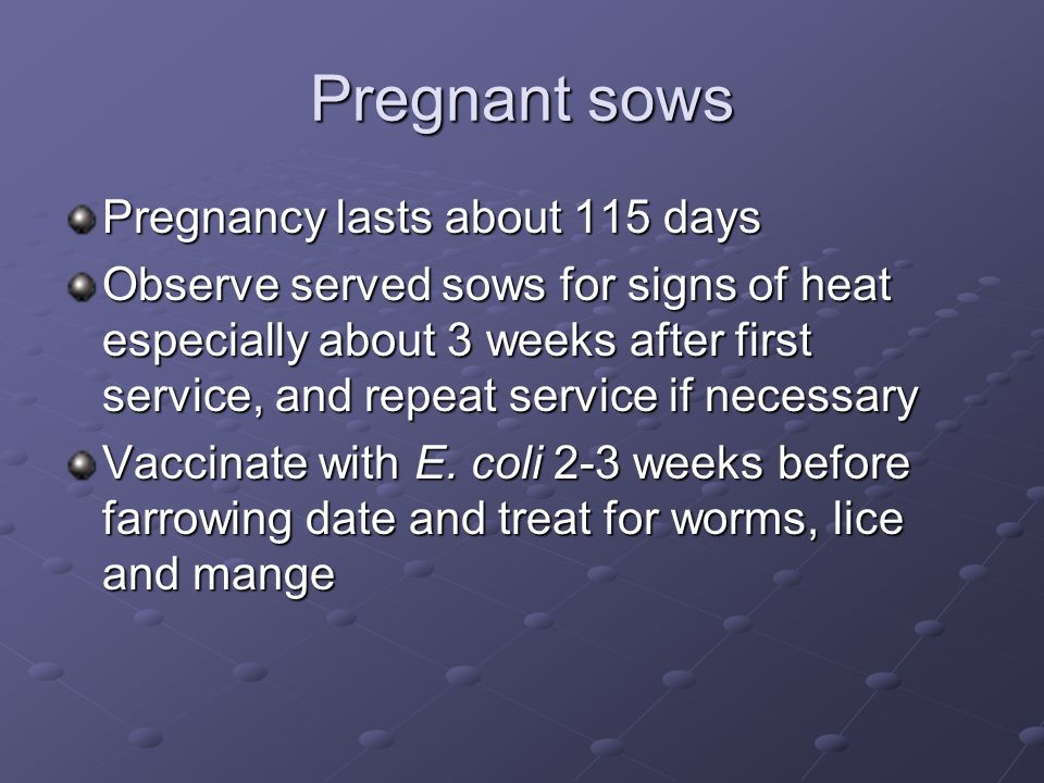Pregnant sows Pregnancy lasts about 115 days Observe served sows for signs of heat especially about 3 weeks after first service, and repeat service if