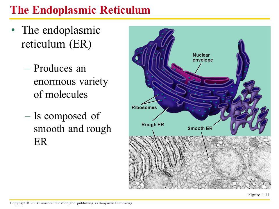 Copyright © 2004 Pearson Education, Inc. publishing as Benjamin Cummings The endoplasmic reticulum (ER) The Endoplasmic Reticulum –Produces an enormou