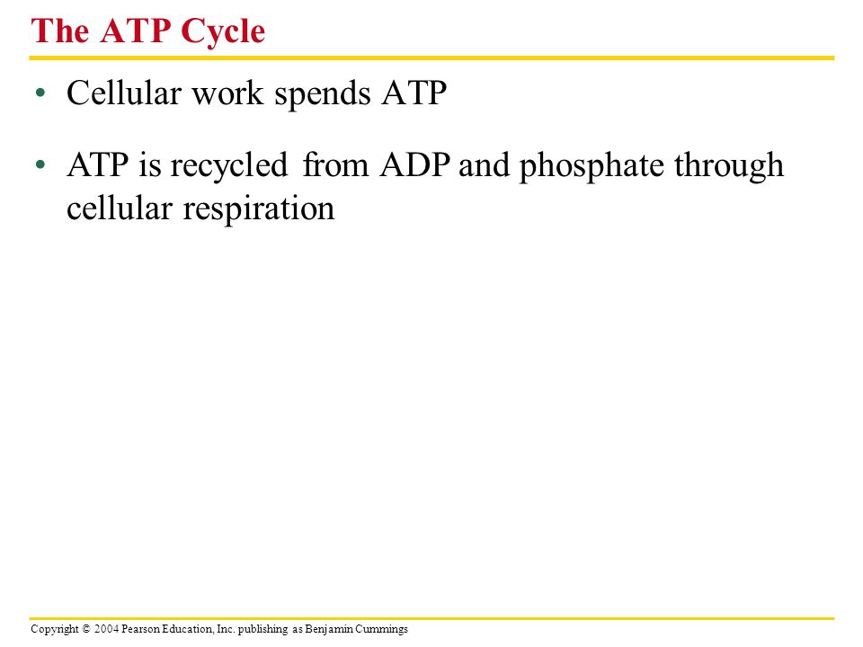 Copyright © 2004 Pearson Education, Inc. publishing as Benjamin Cummings Cellular work spends ATP The ATP Cycle ATP is recycled from ADP and phosphate