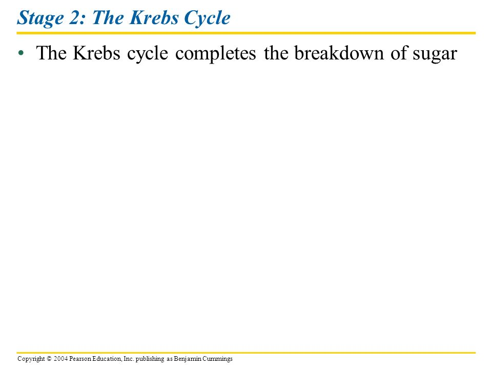 Copyright © 2004 Pearson Education, Inc. publishing as Benjamin Cummings Stage 2: The Krebs Cycle The Krebs cycle completes the breakdown of sugar