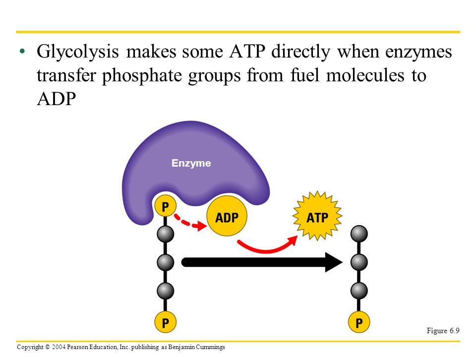 Copyright © 2004 Pearson Education, Inc. publishing as Benjamin Cummings Glycolysis makes some ATP directly when enzymes transfer phosphate groups fro