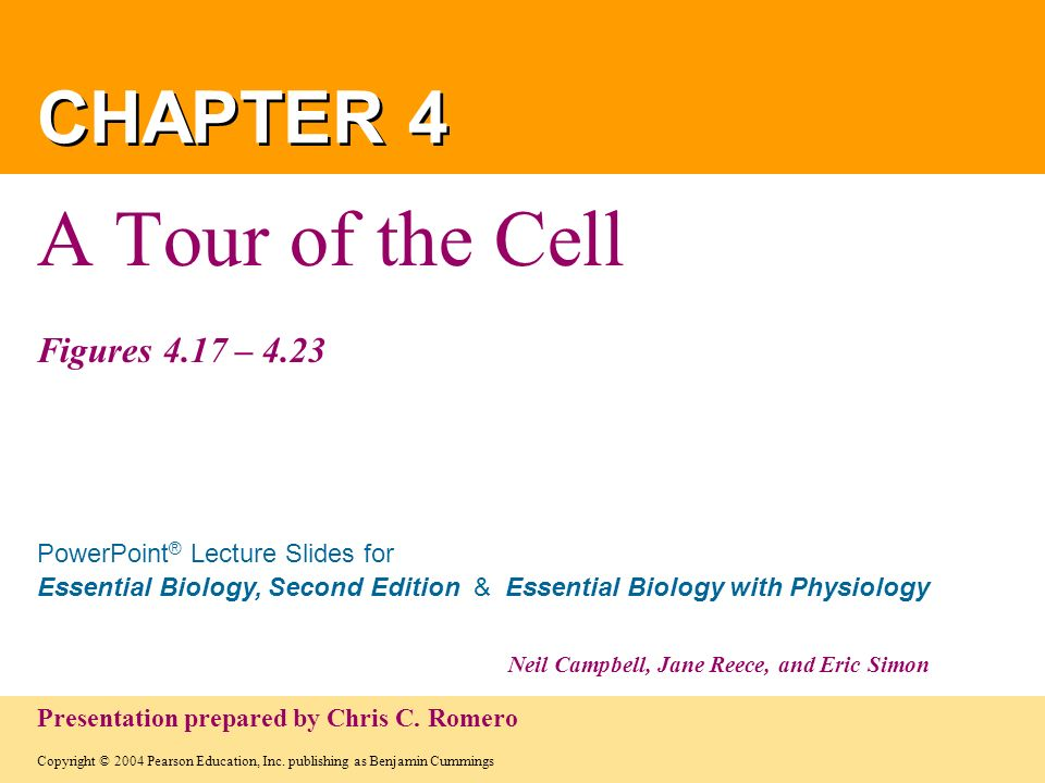 Copyright © 2004 Pearson Education, Inc. publishing as Benjamin Cummings PowerPoint ® Lecture Slides for Essential Biology, Second Edition & Essential