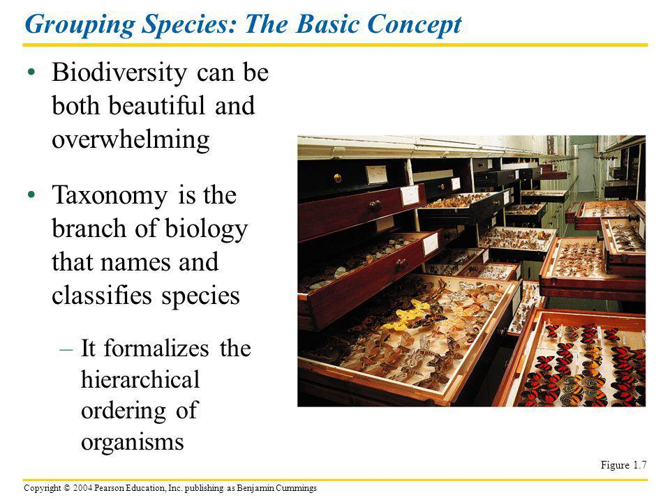 Copyright © 2004 Pearson Education, Inc. publishing as Benjamin Cummings Biodiversity can be both beautiful and overwhelming Grouping Species: The Bas