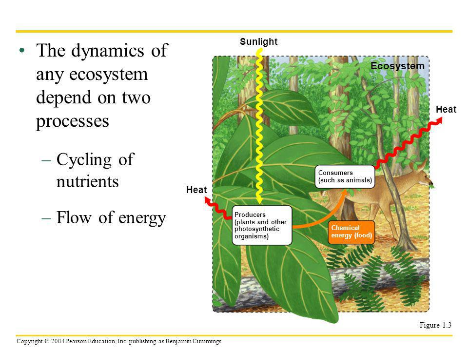 Copyright © 2004 Pearson Education, Inc. publishing as Benjamin Cummings The dynamics of any ecosystem depend on two processes –Cycling of nutrients –