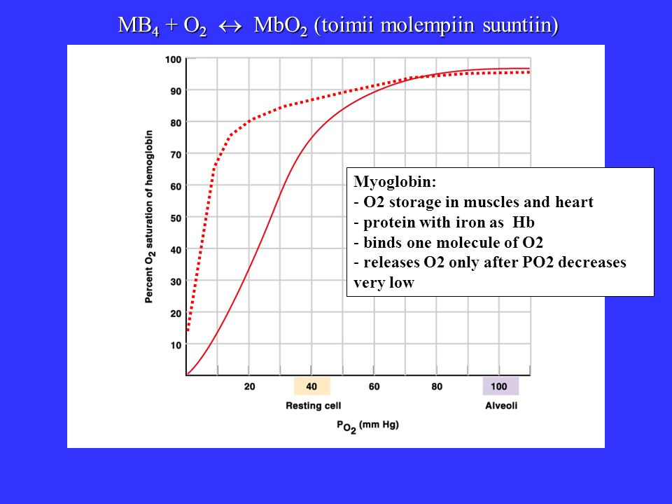 MB 4 + O 2 MbO 2 (toimii molempiin suuntiin) Myoglobin: - O2 storage in muscles and heart - protein with iron as Hb - binds one molecule of O2 - relea