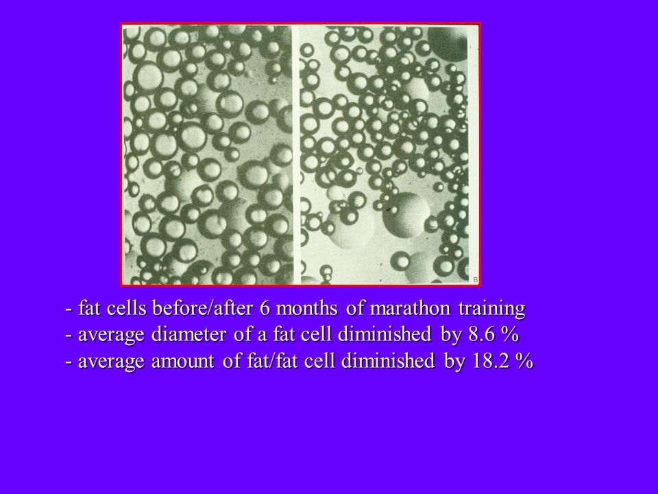 - fat cells before/after 6 months of marathon training - average diameter of a fat cell diminished by 8.6 % - average amount of fat/fat cell diminished by 18.2 %