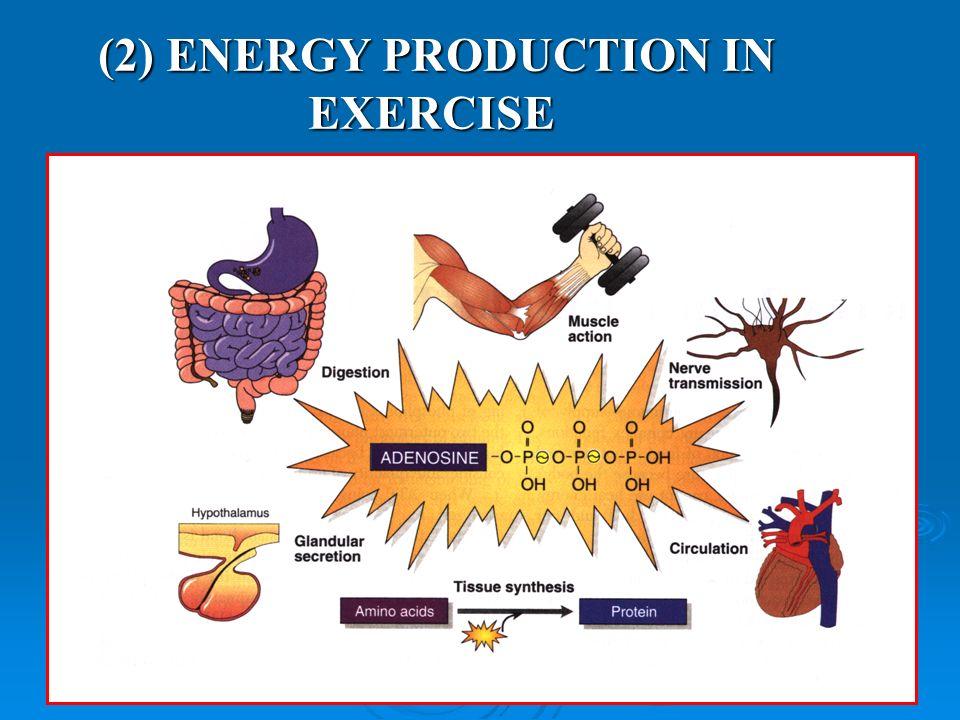 (2) ENERGY PRODUCTION IN EXERCISEKUORMITUKSESSA