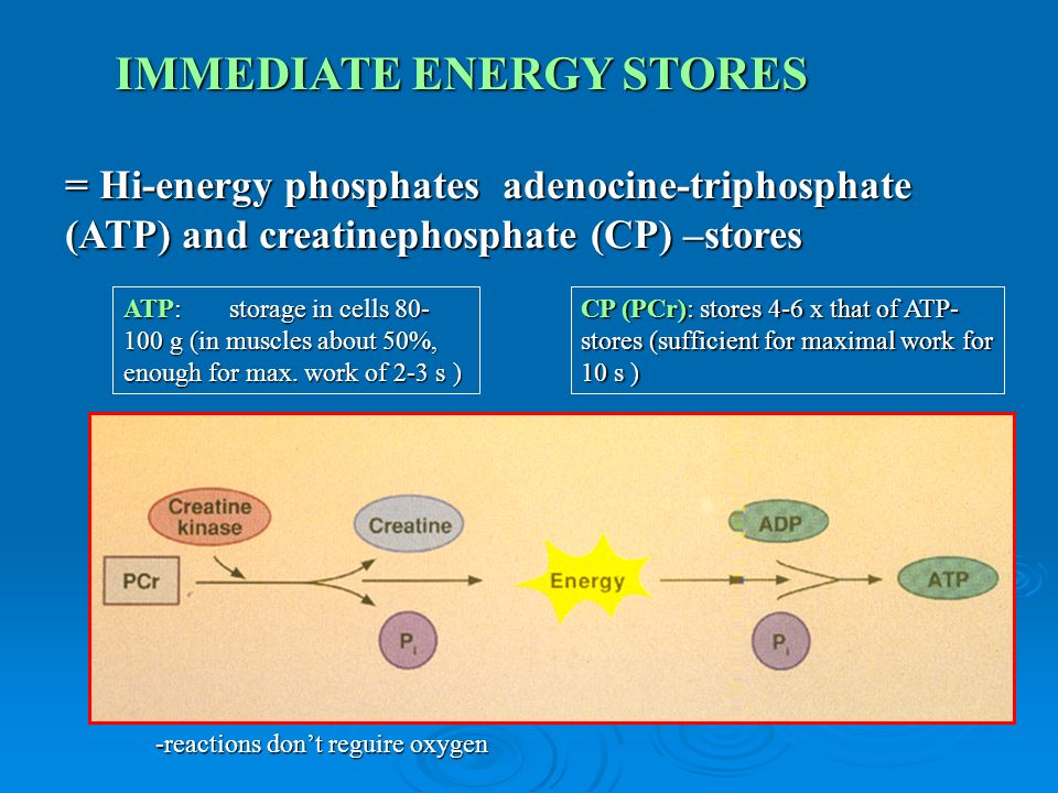 = Hi-energy phosphates adenocine-triphosphate (ATP) and creatinephosphate (CP) –stores IMMEDIATE ENERGY STORES ATP:storage in cells 80- 100 g (in muscles about 50%, enough for max.