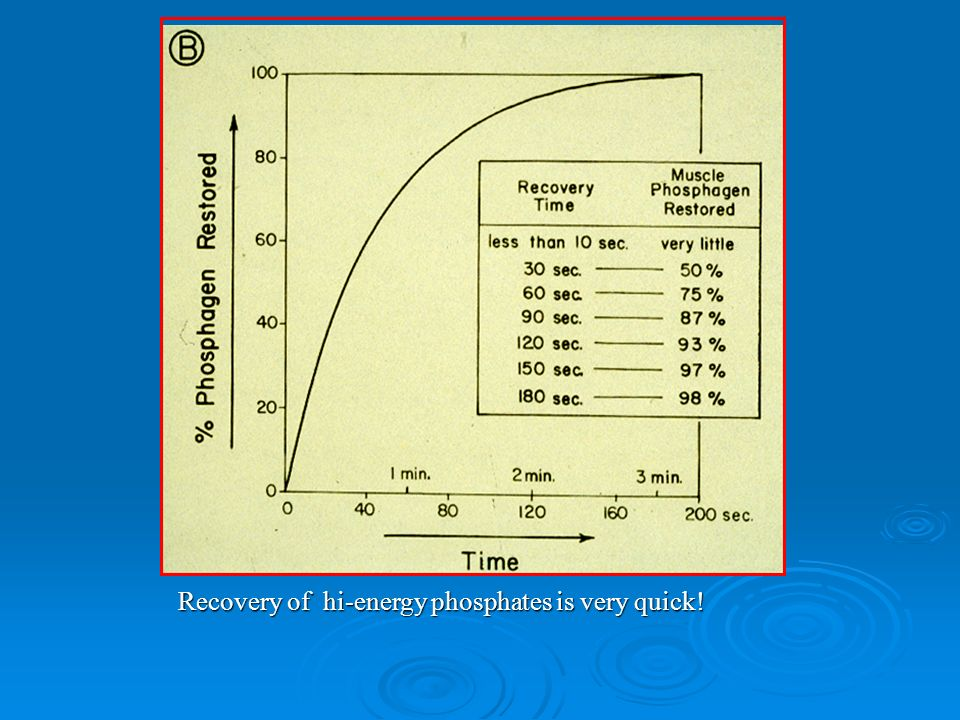 Recovery of hi-energy phosphates is very quick!