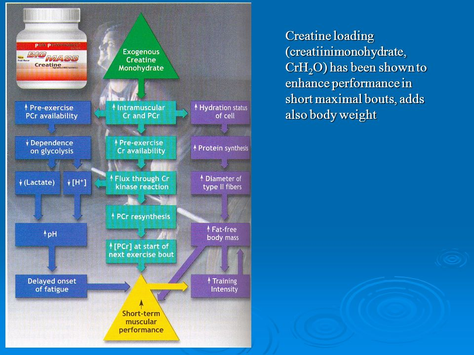 Creatine loading (creatiinimonohydrate, CrH 2 O) has been shown to enhance performance in short maximal bouts, adds also body weight