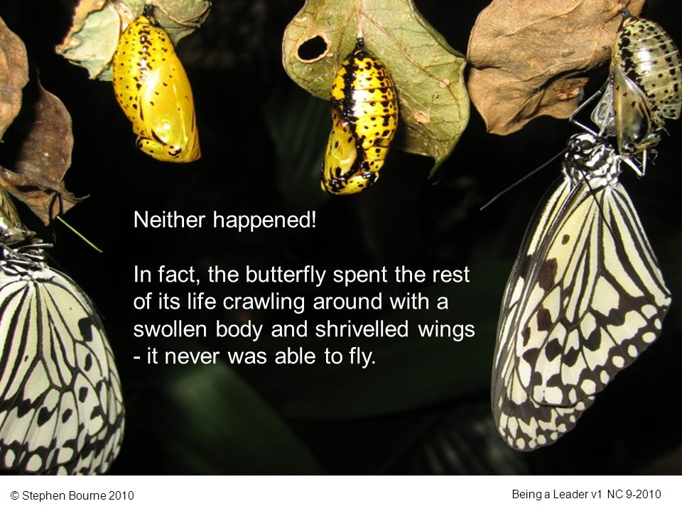 © Stephen Bourne 2010 Being a Leader v1 NC 9-2010 Neither happened! In fact, the butterfly spent the rest of its life crawling around with a swollen b