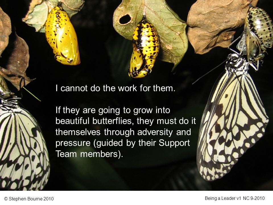 © Stephen Bourne 2010 Being a Leader v1 NC 9-2010 I cannot do the work for them. If they are going to grow into beautiful butterflies, they must do it