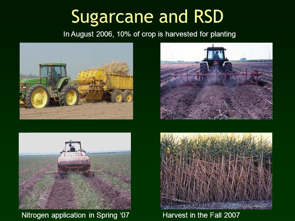 Sugarcane and RSD In August 2006, 10% of crop is harvested for planting Nitrogen application in Spring 07 Harvest in the Fall 2007