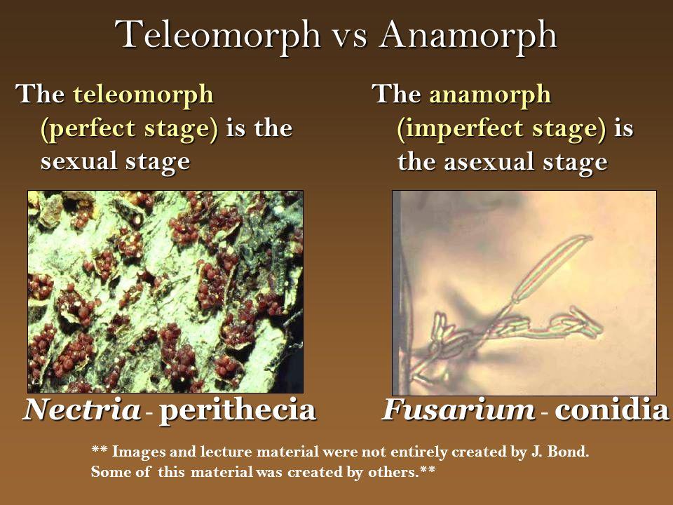 Teleomorph vs Anamorph The teleomorph (perfect stage) is the sexual stage The anamorph (imperfect stage) is the asexual stage Nectriaperithecia Nectri