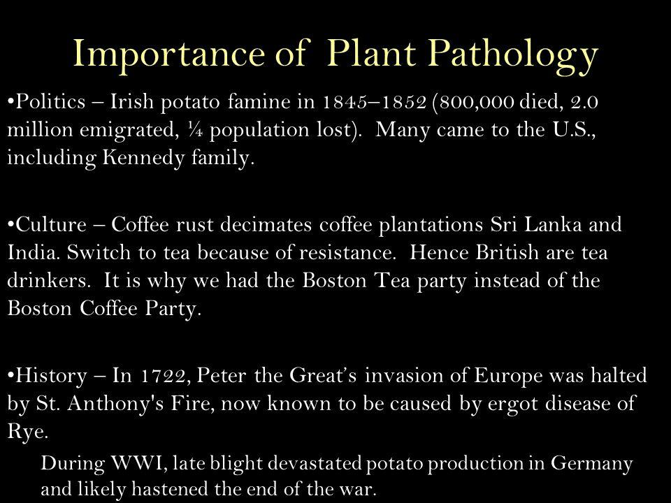 Politics – Irish potato famine in 1845–1852 (800,000 died, 2.0 million emigrated, ¼ population lost).