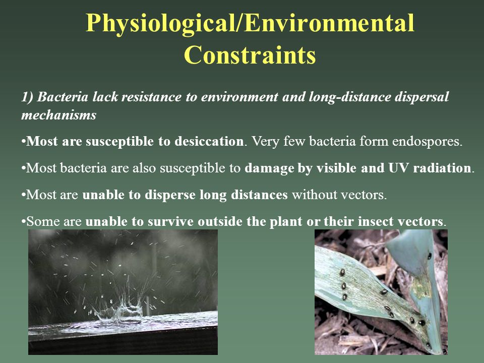 1) Bacteria lack resistance to environment and long-distance dispersal mechanisms Most are susceptible to desiccation. Very few bacteria form endospor