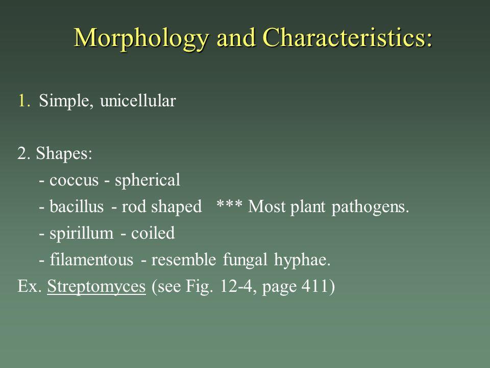 Morphology and Characteristics: 1. 1.Simple, unicellular 2. Shapes: - coccus - spherical - bacillus - rod shaped *** Most plant pathogens. - spirillum
