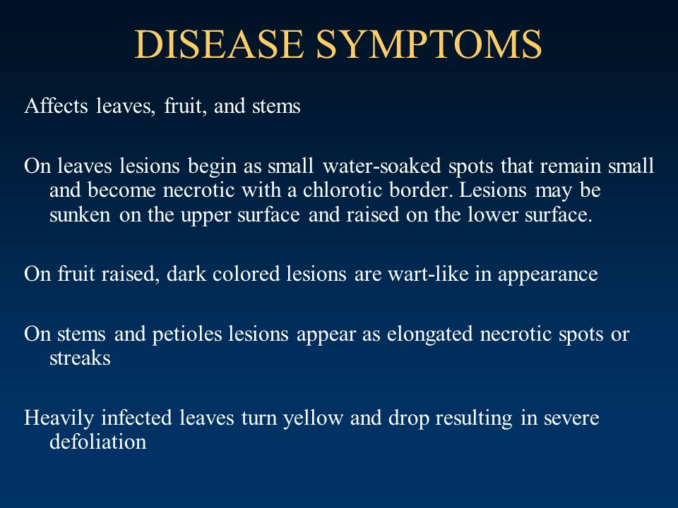 DISEASE SYMPTOMS Affects leaves, fruit, and stems On leaves lesions begin as small water-soaked spots that remain small and become necrotic with a chl