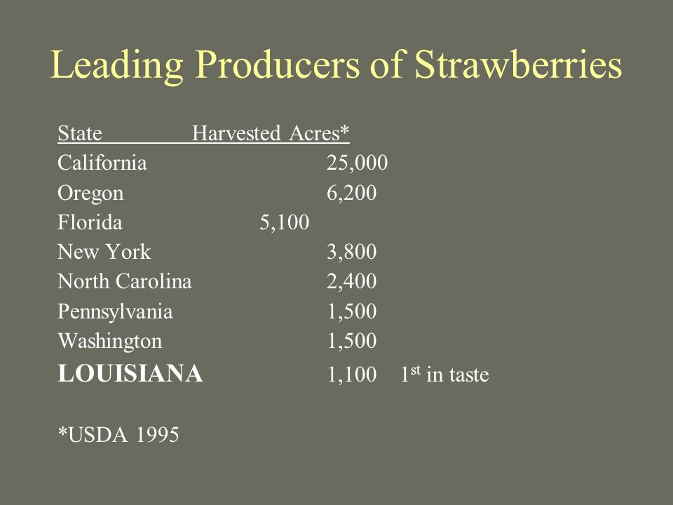 Leading Producers of Strawberries StateHarvested Acres* California25,000 Oregon6,200 Florida5,100 New York3,800 North Carolina2,400 Pennsylvania1,500 Washington 1,500 LOUISIANA 1,100 1 st in taste *USDA 1995