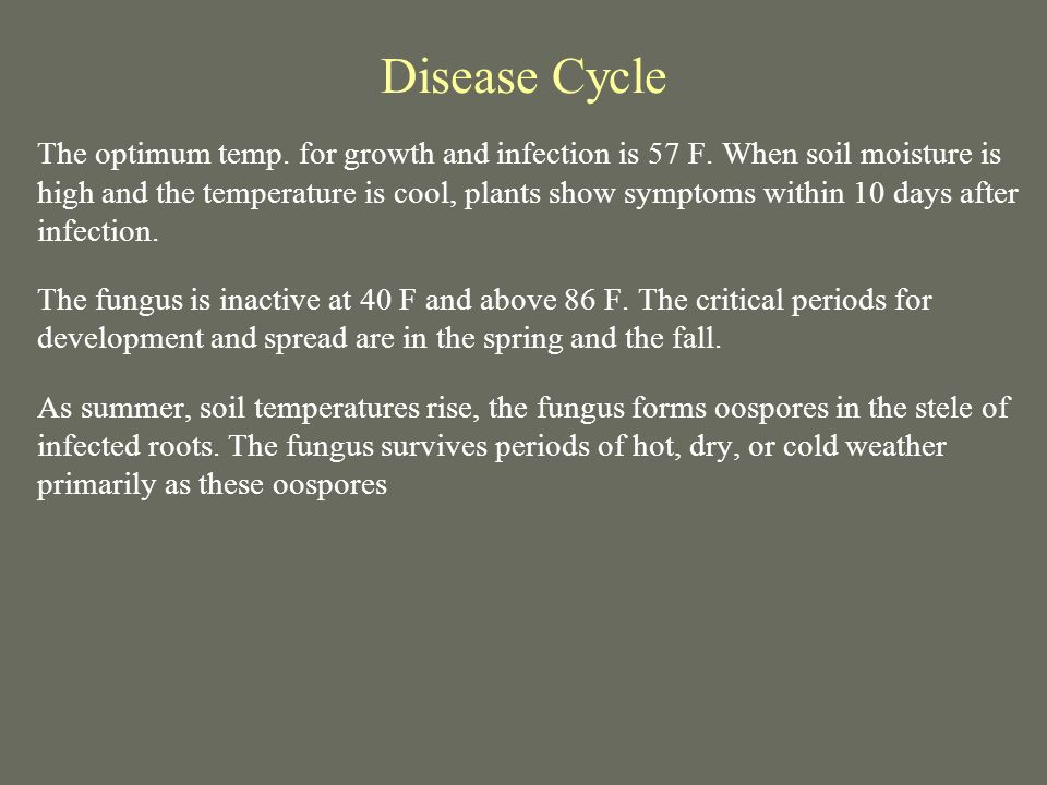 Disease Cycle The optimum temp. for growth and infection is 57 F. When soil moisture is high and the temperature is cool, plants show symptoms within