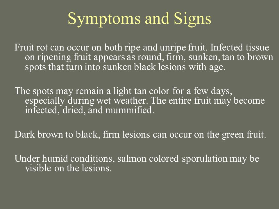 Symptoms and Signs Fruit rot can occur on both ripe and unripe fruit. Infected tissue on ripening fruit appears as round, firm, sunken, tan to brown s