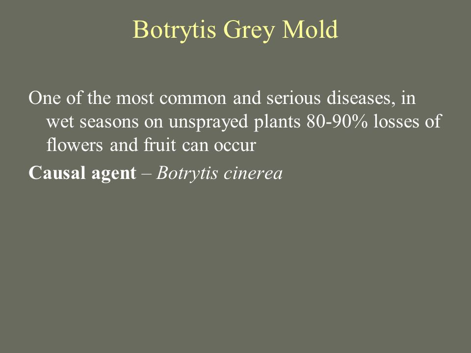 Botrytis Grey Mold One of the most common and serious diseases, in wet seasons on unsprayed plants 80-90% losses of flowers and fruit can occur Causal