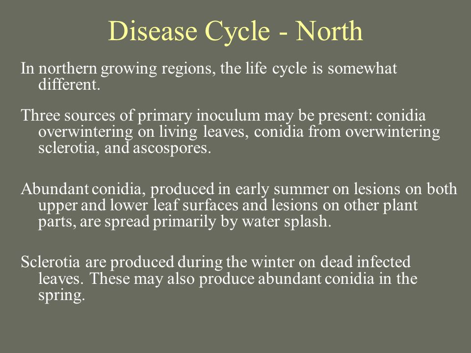 Disease Cycle - North In northern growing regions, the life cycle is somewhat different. Three sources of primary inoculum may be present: conidia ove