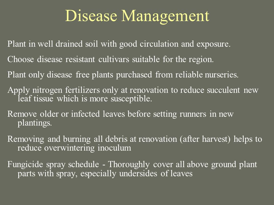 Disease Management Plant in well drained soil with good circulation and exposure.