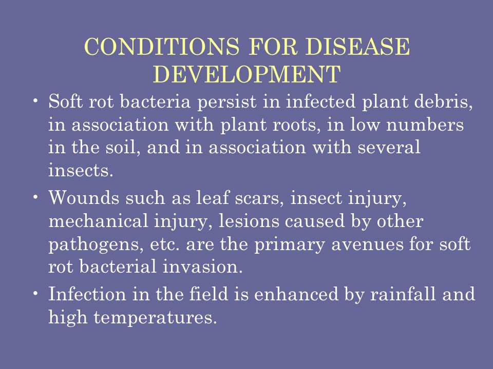 CONDITIONS FOR DISEASE DEVELOPMENT Soft rot bacteria persist in infected plant debris, in association with plant roots, in low numbers in the soil, an