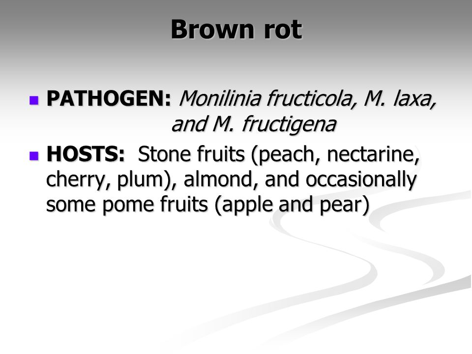 Brown rot PATHOGEN: Monilinia fructicola, M. laxa, and M. fructigena PATHOGEN: Monilinia fructicola, M. laxa, and M. fructigena HOSTS: Stone fruits (p