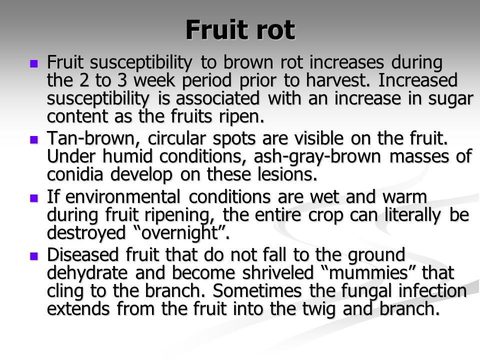 Fruit rot Fruit susceptibility to brown rot increases during the 2 to 3 week period prior to harvest. Increased susceptibility is associated with an i
