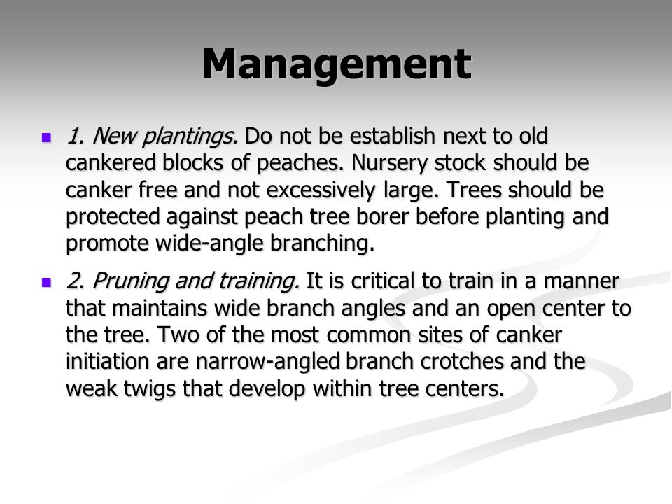 Management 1. New plantings. Do not be establish next to old cankered blocks of peaches. Nursery stock should be canker free and not excessively large