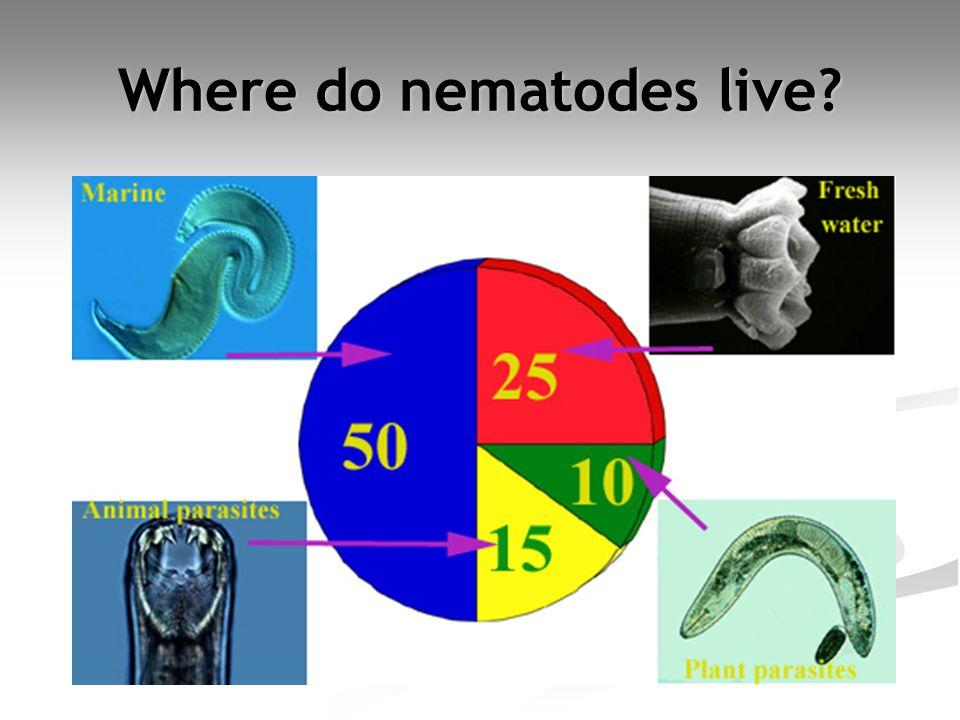 Where do nematodes live?