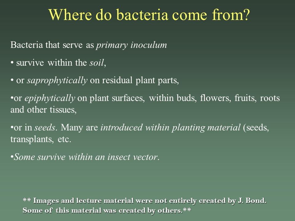 Where do bacteria come from? Bacteria that serve as primary inoculum survive within the soil, or saprophytically on residual plant parts, or epiphytic
