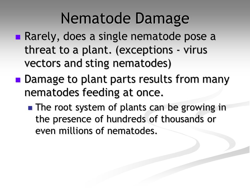 Nematode Damage Rarely, does a single nematode pose a threat to a plant. (exceptions - virus vectors and sting nematodes) Rarely, does a single nemato