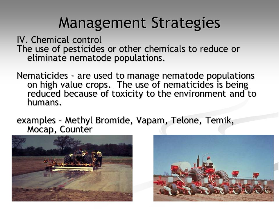 Management Strategies IV. Chemical control The use of pesticides or other chemicals to reduce or eliminate nematode populations. Nematicides - are use