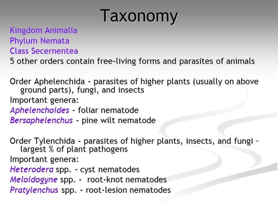 Taxonomy Kingdom Animalia Phylum Nemata Class Secernentea Class Secernentea 5 other orders contain free-living forms and parasites of animals Order Ap